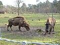Mannheim Tier Park.JPG