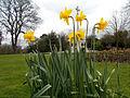 Manor Park, Sutton, Surrey, Greater London - 9.jpg