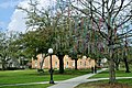 Mardi Gras Bead Tree on Campus (3314099537).jpg