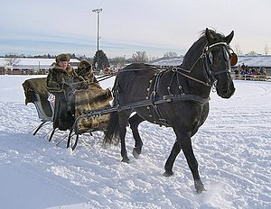 Horse harness - A horse with a breastcollar harness pulling a sleigh