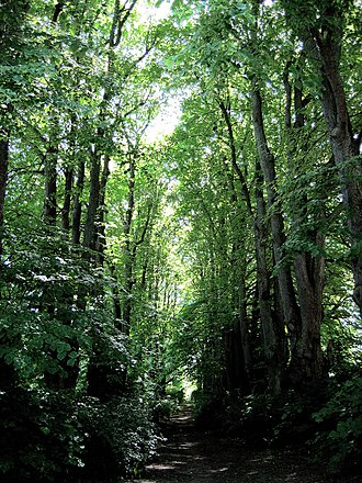 Mariebjerg Cemetery - One of the tree-lined avenues