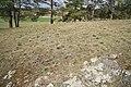 Meadow with Pulsatilla grandis at natural monument Kobylinec near Trnava, Třebíč District.jpg