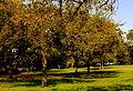 Meridian Park orchards (8399553491).jpg