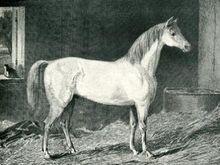 Messenger horse.jpg