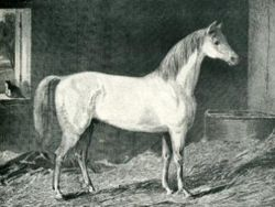Målning föreställande Messenger, målad av George Stubbs.