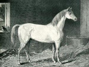 Messenger (horse) - Messenger