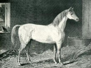 Messenger (horse) Late 18th century Thoroughbred stallion