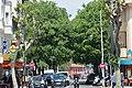 Micocoulieralle Avenue Robert Soleau.jpg