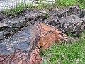 Microsyenite dike (Precambrian; Michipicoten River Bridge South roadcut, south of Wawa, Ontario, Canada) 32 (47924971231).jpg