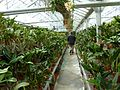 MoBot Orchid Greenhouse - Flickr - treegrow (1).jpg