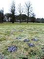Molehills - geograph.org.uk - 1294833.jpg