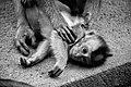 Monkey Baby (186454969).jpeg