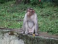 Monkey from Bannerghatta National Park 8558.JPG