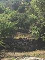 Montepellegrino45.jpg