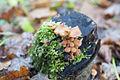 Moss und Pilz.jpg