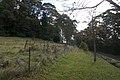 Mount Wilson NSW 2786, Australia - panoramio (51).jpg