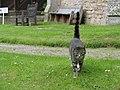 Much Cowarne - The Church Cat - geograph.org.uk - 1356041.jpg