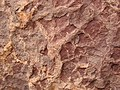 Mudcracks on base of sandstone bed (Kayenta Formation or Navajo Sandstone, Lower Jurassic; Potash-Poison Spider dinosaur tracksite, Williams Bottom, southwest of Moab, Utah, USA) 26 (32309969614).jpg