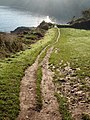 Muddy Path down to Elberry Cove - geograph.org.uk - 364654.jpg