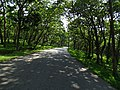 Mudumalai Tiger Reserve, Tamil Nadu DSC00747.JPG