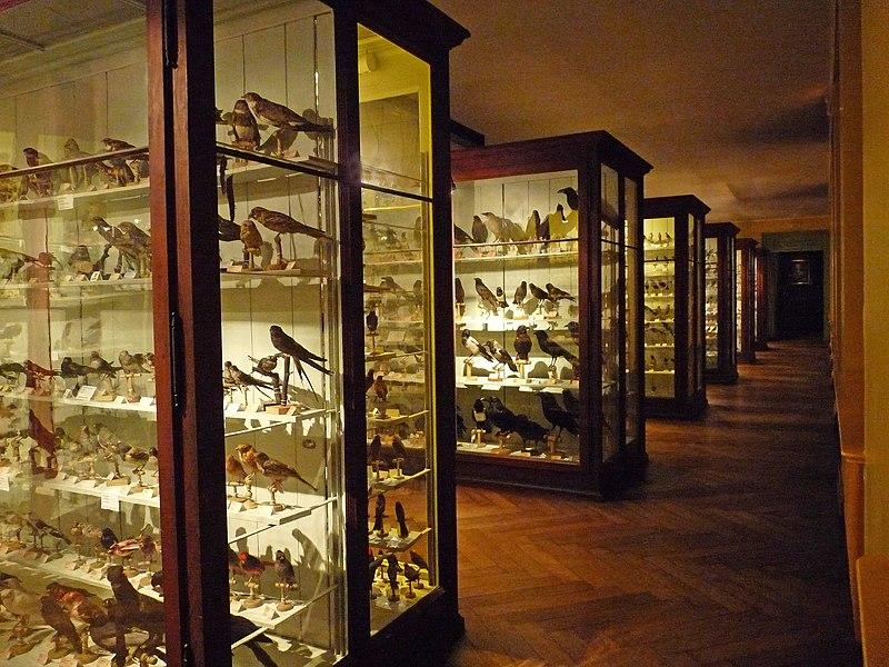 File:Musée zoologique de Strasbourg-Ornithologie (2).jpg