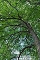 Mykulyntsi-buky-n2-15056868.jpg