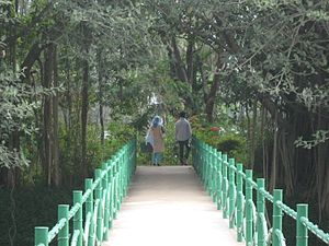Karanji Lake - Bridge to the Butterfly Park