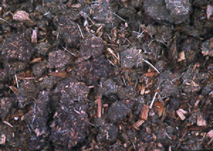 Manure - Compost containing turkey manure and wood chips from bedding material is dried and then applied to pastures for fertilizer.