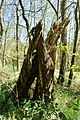 NSG Bildchen Wald 2.jpg