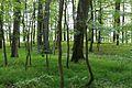 NSG Hakendorfer Wälder Laubwald.jpg