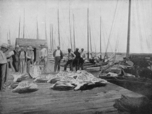 Conch (people) - Old photo depicting Conchs in Key West, circa 1900