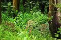Nagarhole National Park, Kodagu 6905.JPG