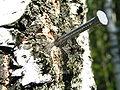 Nail in a tree.jpg