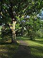 Nannen Arboretum 20160819 01.jpg