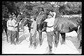 Narcyz Witczak-Witaczyński - Podział i przekazywanie koni 1 Pułku Strzelców Konnych (107-909-9).jpg