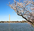 National Mall & Memorial Parks (6b0d66f8-aef6-4894-ba8f-055c998c8f20).jpg