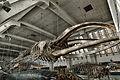Natural History Museum (8487121330).jpg