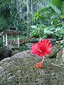 Nature of Langkawi (16).JPG