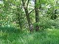 Naturschutzgebiet Heuckenlock 21.05.2014 21.JPG