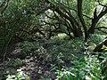 Naturschutzgebiet Heuckenlock 21.05.2014 Phase 103.JPG