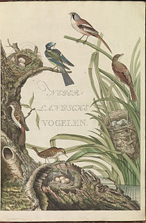 <i>Nederlandsche vogelen</i> 18th century Dutch book with images of birds