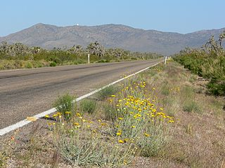 Nevada State Route 164 near the Crescent mining district and the Wee Thump Joshua Tree Wilderness