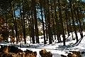 Nevado de Toluca, Estado de México- State of Mexico (16387058138).jpg