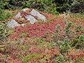 Nisqually Vista trail mid September 2015. (f43cb7c95d4a466586a53278e04ad1c2).JPG