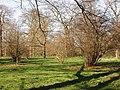 Nut trees, Kew Gardens - geograph.org.uk - 362355.jpg