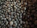 NutmegsGrenada12.jpg