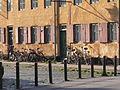 Nyboder - Häuserreihe 1.jpg