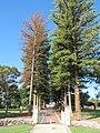 OIC mosman park memorial trees 1.jpg
