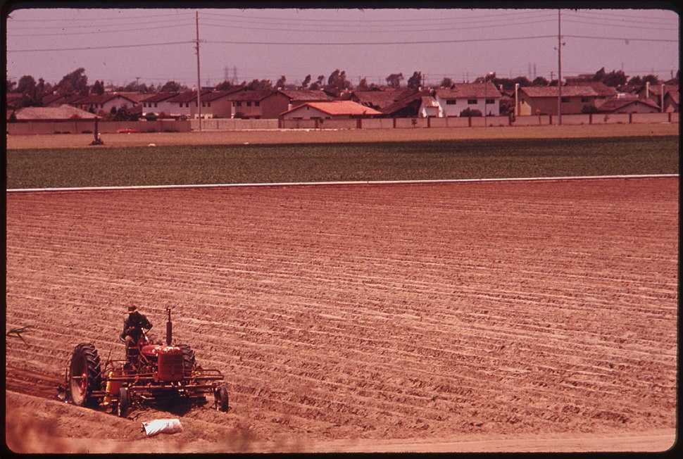 ONE OF A FEW REMAINING FARM FIELDS NEAR THE OCEAN IN FAST GROWING ORANGE COUNTY. SOME 4 PERCENT OF THE STATE... - NARA - 557476