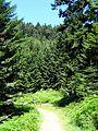 Oberharmersbach, grosser Hanskakobweg, Etappe 3 nach Zell 4.jpg